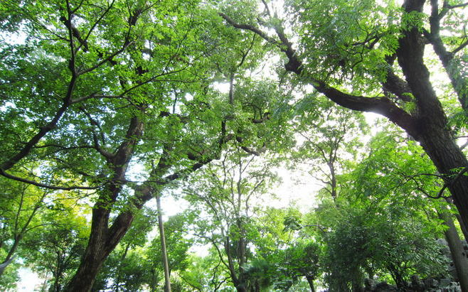 海盐绮园,鲜为人知却气质优雅的江南园林