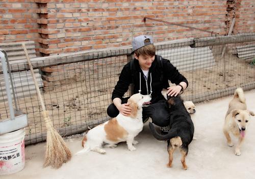 徐海乔在流浪动物救助站